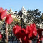 flowers Passeig de Gràcia