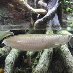 Aquarium Barcelona fishes