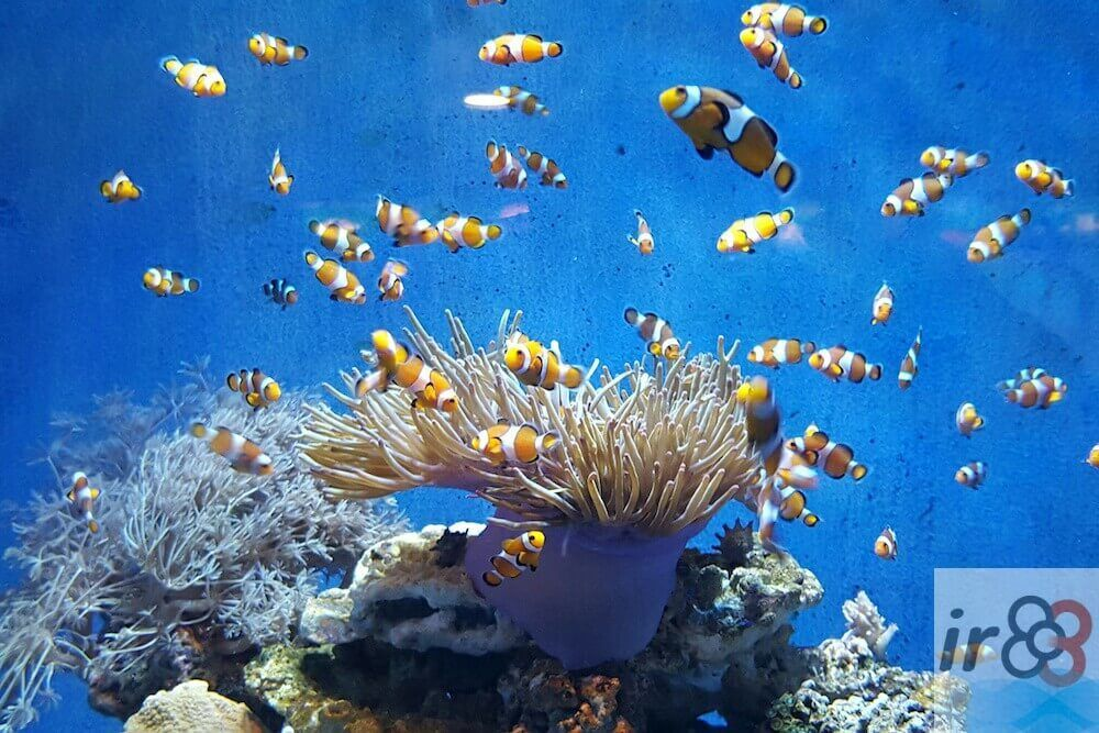 purchase Aquarium Barcelona tickets