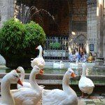 geese at Cathedral cloister