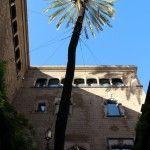 palm Casa de l'Ardiaca
