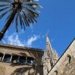 palm and Barcelona cathedral