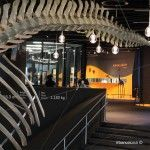 Museu Blau interior