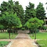 trees at cloister of Monastery