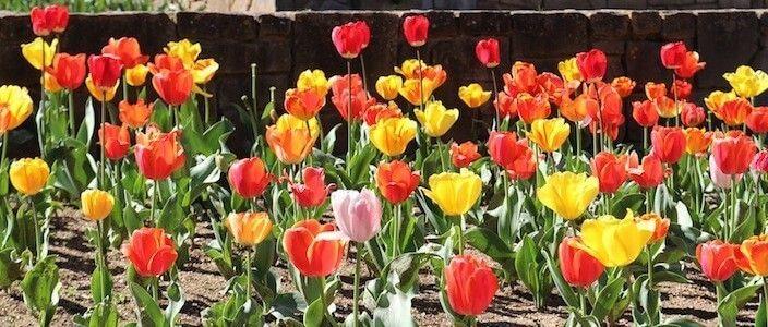 flowers Mossèn Cinto Verdaguer gardens