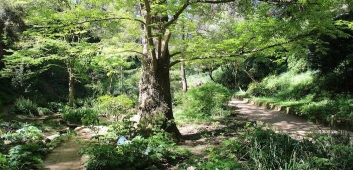 Barcelona Historic Botanical Gardens