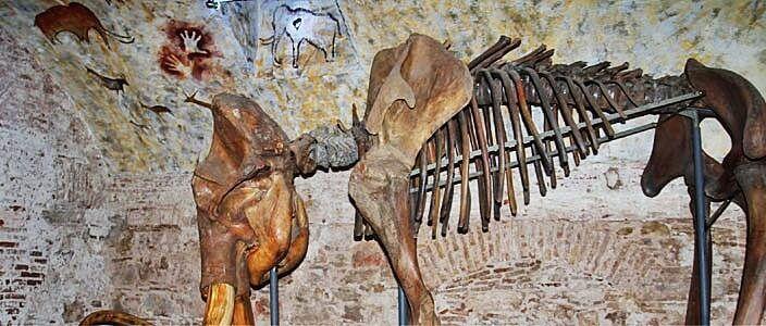 Barcelona Mammoth Museum