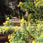 flowers Labyrinth Park of Horta