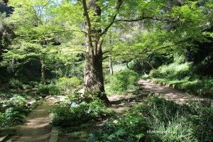 Historic Botanical Garden