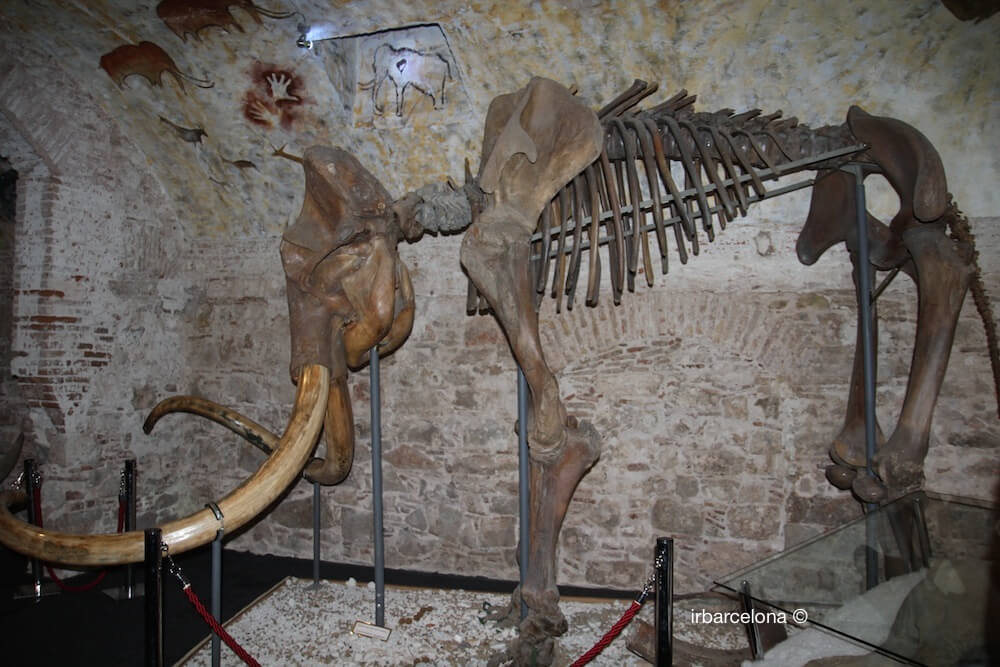 Barcelona Mammoth Museum Ticket Price And Schedule