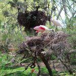 aviary Barcelona zoo