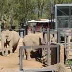 elephants Barcelona zoo