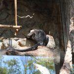 primate Barcelona zoo