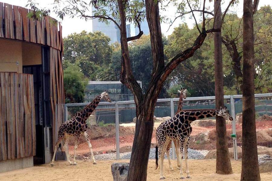purchase Barcelona Zoo tickets