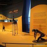 temporary exhibition Animalarium