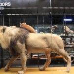 lion and stuffed mammals