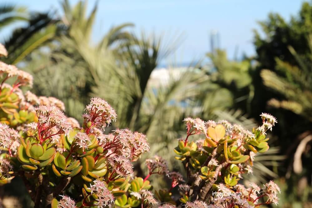 flowers Mossèn Costa i Llobera gardens