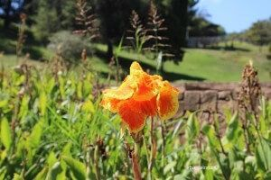 Jardins Mossèn Cinto Verdaguer (Gardens)