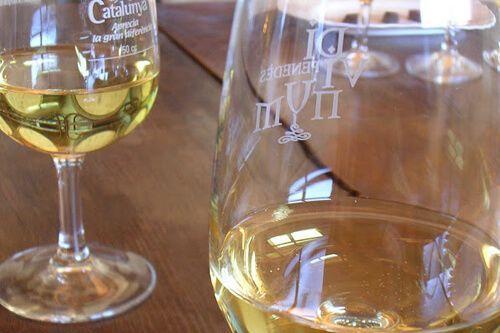 Wine-Tasting Barcelona