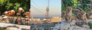 Barcelona Zoo + Aeri del Port Cable Car
